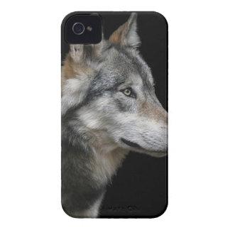 Wolf Portrait Black Background Predator Carnivore iPhone 4 Case