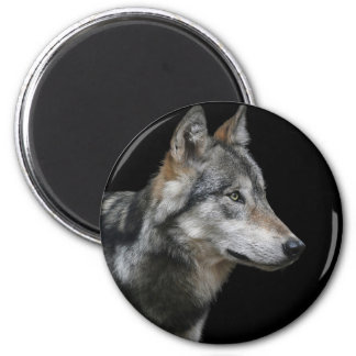 Wolf Portrait Black Background Predator Carnivore Magnet