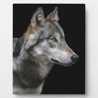 Wolf Portrait Black Background Predator Carnivore Plaque