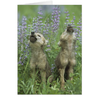 Wolf Puppies Howling In Meadow Card
