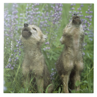 Wolf Puppies Howling In Meadow Tile