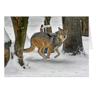 Wolf Running in Snow Card