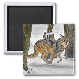 Wolf Running in Snow Magnet