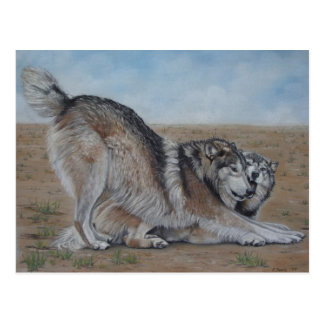 wolf scenic wildlife realist animal art postcard