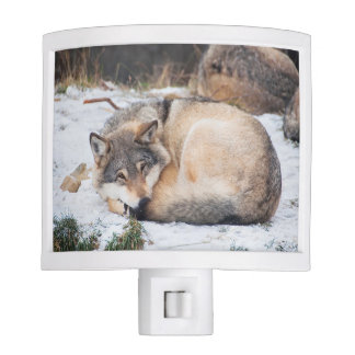 Wolf sleeping nite lights