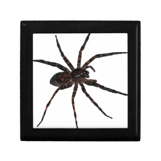 Wolf Spider Gift Boxes