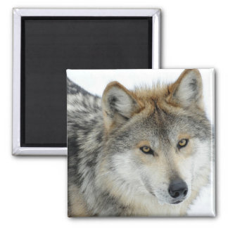 Wolf Square Magnet