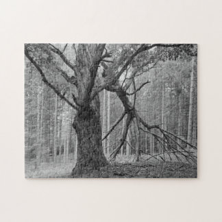 Wolf Tree, Old Maple in Red Pine Plantation Puzzles