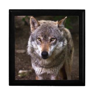 wolf trinket box