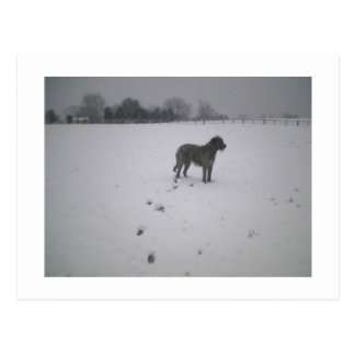 Wolfhound in snow postcard