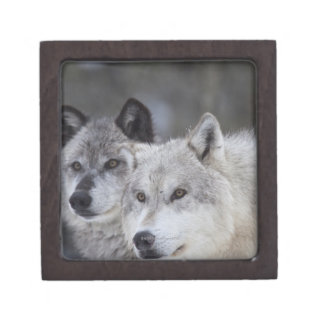 Wolves (Canus lupus) from West Yellowstone. This Premium Keepsake Box