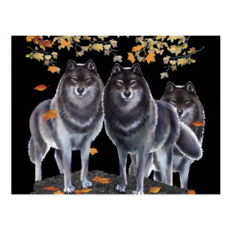Wolves In Fall Post Cards