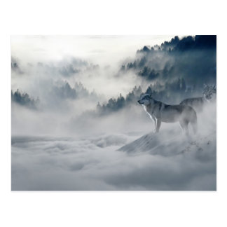 Wolves In Winter Postcard