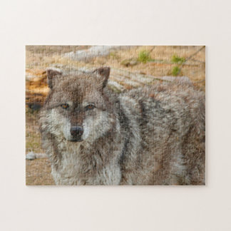 Wolves of Yellowstone. Jigsaw Puzzle
