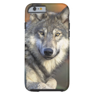 Wolves Tough iPhone 6 Case