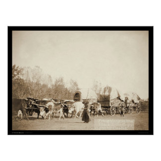 Woman Bullwhacking Oxen SD 1887 Poster