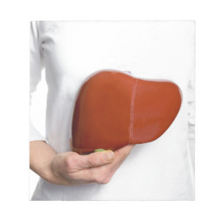 Woman holding human liver model at white body notepads