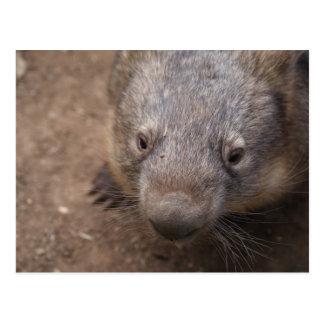 Wombat Kiss Postcard