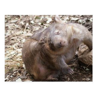 Wombat Scratch Postcard