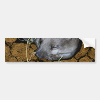 Wombat_Siesta_Time,_Bumper_Sticker. Bumper Sticker