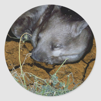 Wombat_Siesta_Time,_ Round Sticker