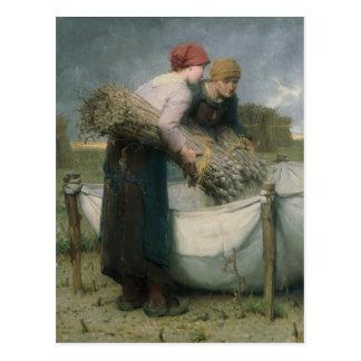 Women in the Field, 1882 Postcard