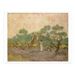 Women Picking Olives, Vincent van Gogh Post Card