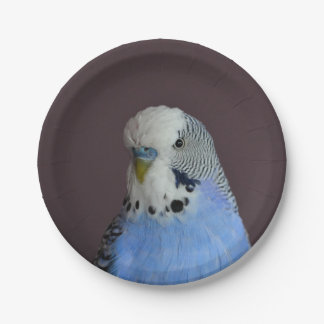 Wonderful Budgie 7 Inch Paper Plate