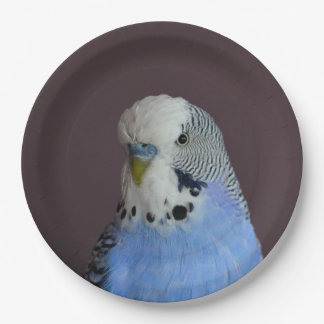 Wonderful Budgie 9 Inch Paper Plate
