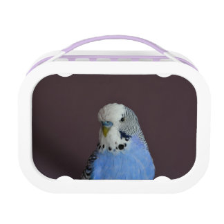 Wonderful Budgie Lunchboxes