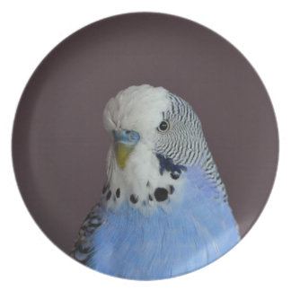 Wonderful Budgie Plate