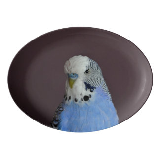 Wonderful Budgie Porcelain Serving Platter