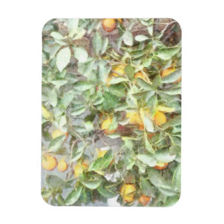 Wonderful Chinese Orange plant Rectangular Photo Magnet