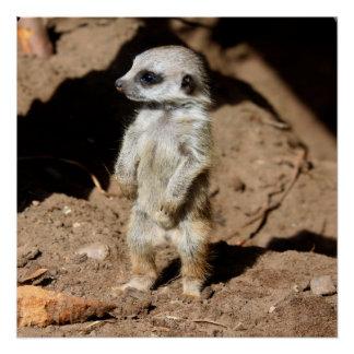 Wonderful Cute Sweet African Meerkat Animal Perfect Poster