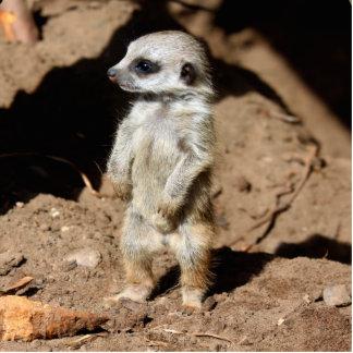 Wonderful Cute Sweet African Meerkat Animal Photo Sculpture Magnet