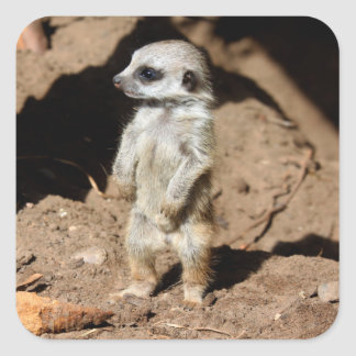 Wonderful Cute Sweet African Meerkat Animal Square Sticker