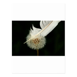 Wonderful Dandelion Postcard