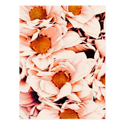 wonderful flowers 08 peach postcard