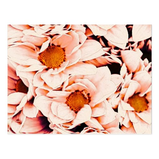 wonderful flowers 08 peach post cards