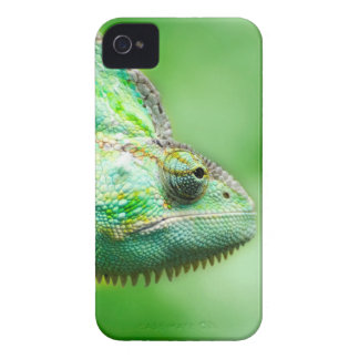 Wonderful Green Reptile Chameleon iPhone 4 Covers