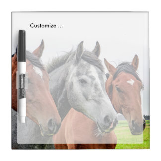 Wonderful Horses Stallion Photography Dry-Erase Whiteboards