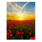 Wonderful Poppy Field Sunset Horizon Postcard