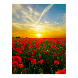 Wonderful Poppy Field Sunset Horizon Postcard