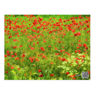 Wonderful poppy flowers VII - Wundervolle Mohnblum Postcard