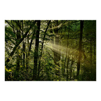 Wonderful Summer Sunbeams in the morning Forest Poster