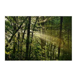 Wonderful Sunbeams in the morning Forest Acrylic Wall Art