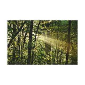 Wonderful Sunbeams in the morning Forest Canvas Print