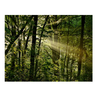 Wonderful Sunbeams in the morning Forest Postcard