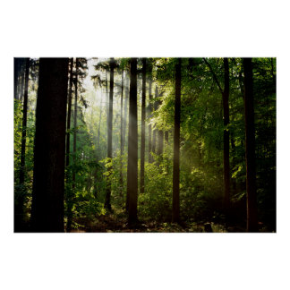 Wonderful Sunbeams in the morning Forest Poster