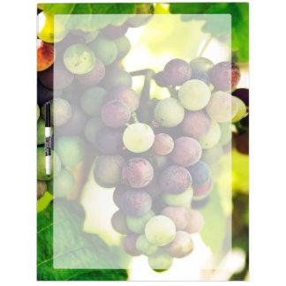 Wonderful Vine Grapes,  Autumn Fall Sun Dry Erase Board